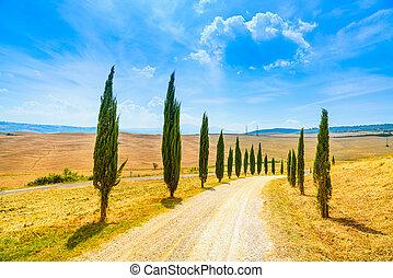 ciprés, árboles, filas, y, un, blanco, camino, paisaje rural, en, val, d, orcia, tierra, cerca, siena, toscana, italia, europe.