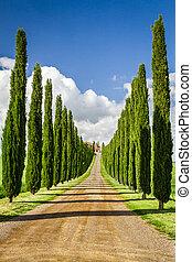 cipreses, toscana, agritourism, camino, entre