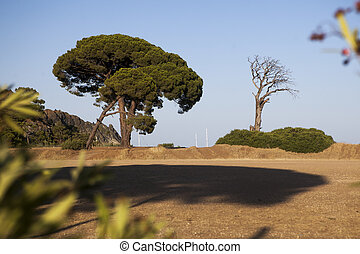 Cirali view with pines and old died tree