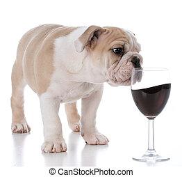 circa, cucciolo, fuoriuscita, vino