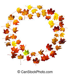 Circle frame of colorful autumn maple leaves isolated on white. Background with space for text top view.