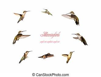 Circle of hummingbirds.
