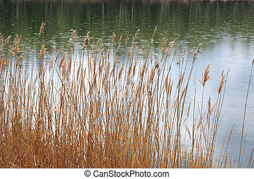 Circles on a water of a forest lake and dry reeds