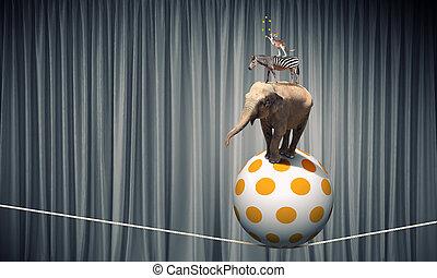 circo, animais