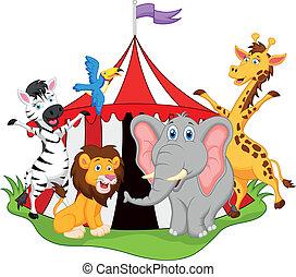 circo, animali, cartone animato