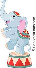 Circo, elefante