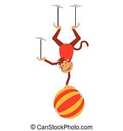 circo, isolado, macaco