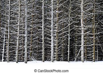 circuits arbre hiver