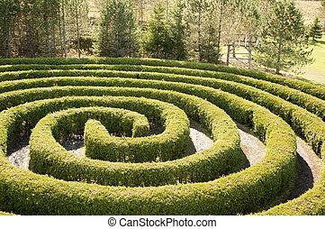 circular maze using cedar trees