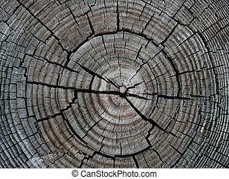 Circular Wood Knots
