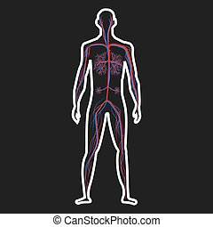 Circulation system of human on dark background vector ...