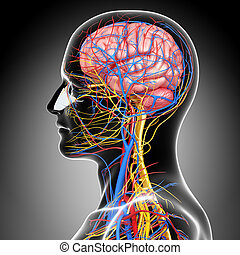 circulatory system of human brain - 3d rendered illustration...
