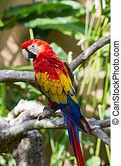 circundante, naturaleza, papagallo, escarlata