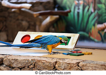 Circus shows of parrots on Fuerteventura, Canary Island, ...