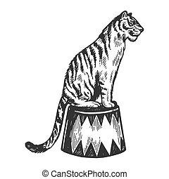 Circus tiger animal engraving vector illustration. Scratch...