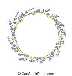 cirkel, blomningen, lavendel
