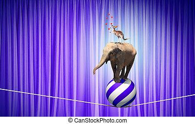 cirkus, djuren