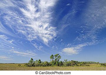 Cirrus Clouds over the Florida Everglades - Beautiful cirrus...