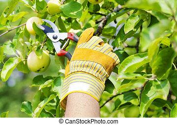 cisailles, jardinier, gant, main