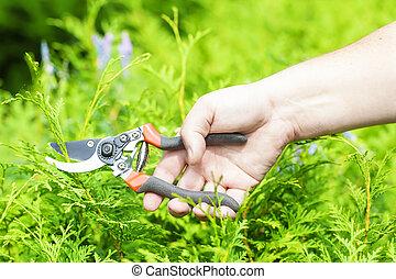 cisailles, jardinier, main