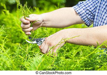 cisailles, jardinier, mains