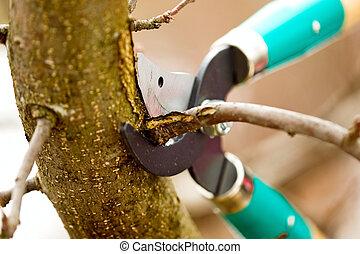 ciseaux, découpage, arbre diverge