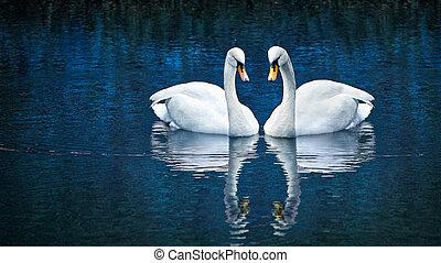 cisne blanco, dos