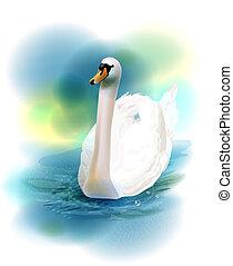 cisne blanco, ilustración
