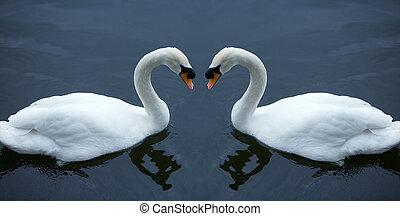 cisne, branca, amor