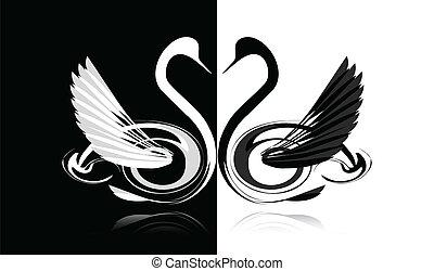 cisne branco, pretas