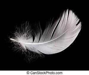 cisne, pluma