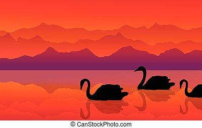 cisne, silueta, lago, paisagem