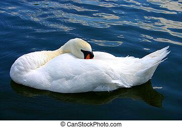 cisne, sueño