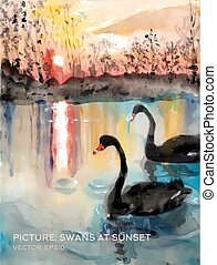 cisnes, óleo, versão, pinturas, vetorial, lagoa, seda, pôr do sol