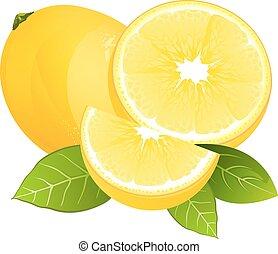 citroen, citrus, bladeren, sappig, illustratie, vrijstaand, realistisch, fruit, vector, fris, slice.