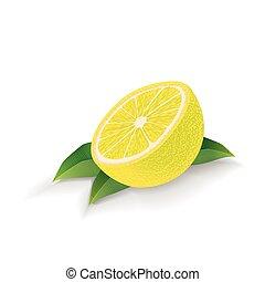 citroen loof, vrijstaand, achtergrond., vector., witte
