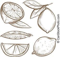 citroen snijdt, citrus, blossom , bladeren, hand, citroenen, getrokken, tak