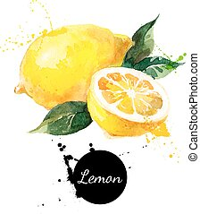 citron, main, aquarelle, fond, dessiné, blanc, peinture