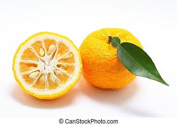 Citron on white background close up shoot