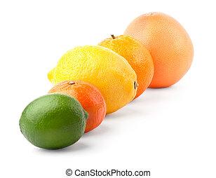 citronträd, in, rad