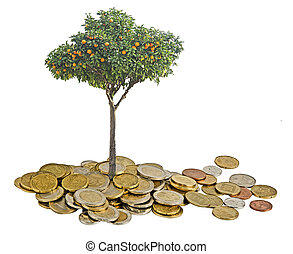 citronträd, träd, växande, från, mynter