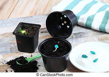citrouille plant l gume citrouille jeune lit plant images de stock rechercher des photos. Black Bedroom Furniture Sets. Home Design Ideas