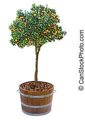 mandarine pot vieil arbre argile pierre vieux mur arbre mandarine arri re plan pot. Black Bedroom Furniture Sets. Home Design Ideas