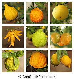 citrus collage
