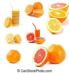 citrus collection