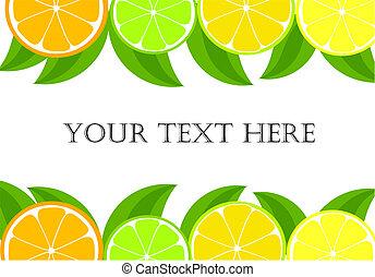 Citrus frame - orange, lemon, lime slices and leaves. Vector illustration