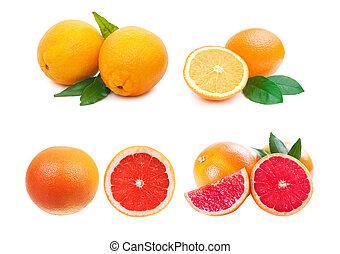 Citrus fruit collection. Orange, grapefruit oh white background