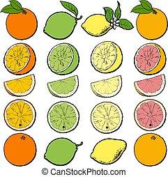 Citrus fruit cutting process set - whole, half, sliced orange, lime, lemon and grapefruit