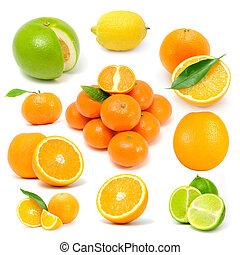Citrus Fruit Set (Grapefruit, Lemon, Orange, Tangerine, Lime) Isolated on White Background