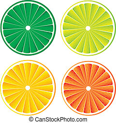 Citrus fruit slices isolated on white